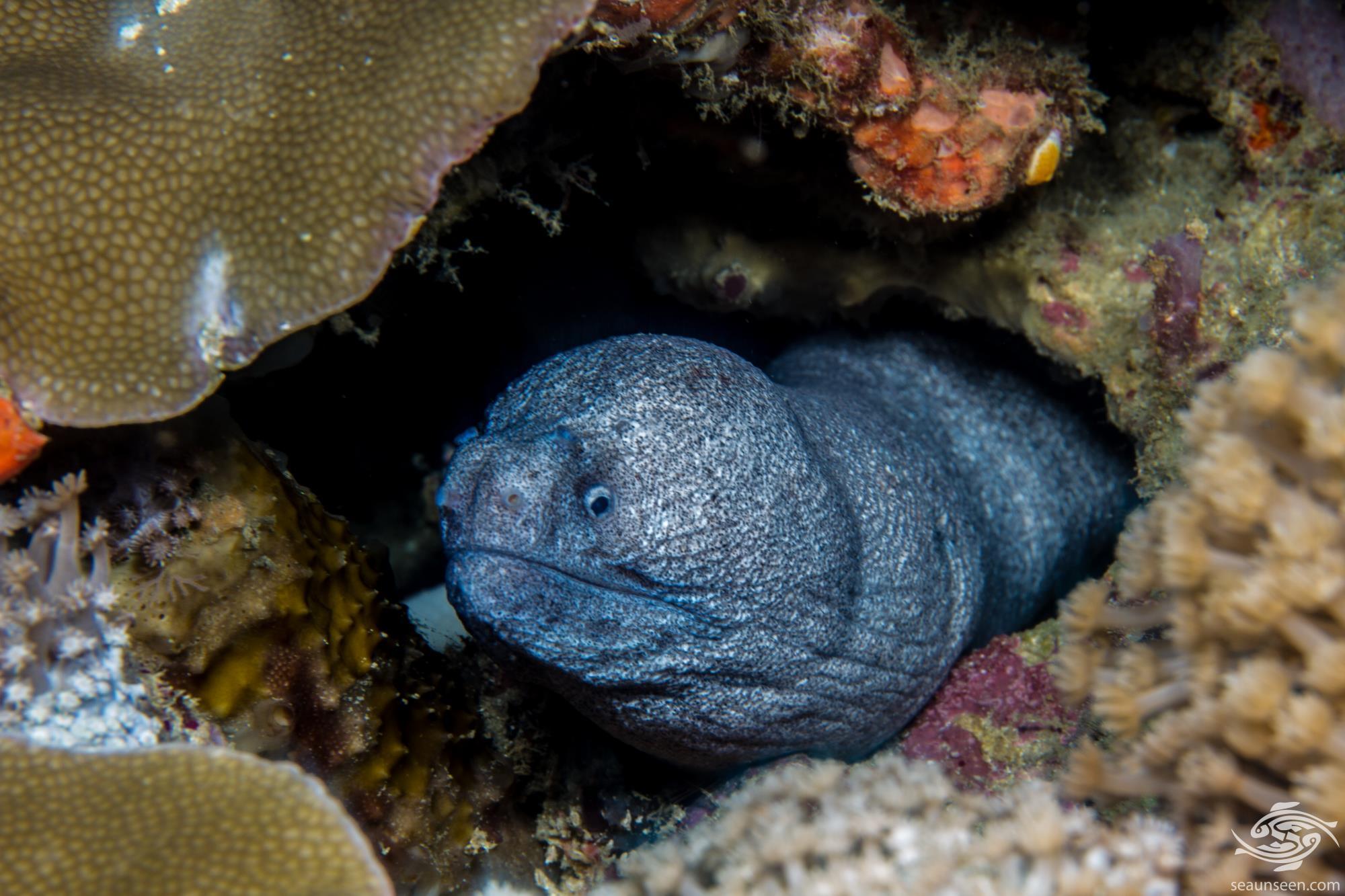 unidentified eel species 3