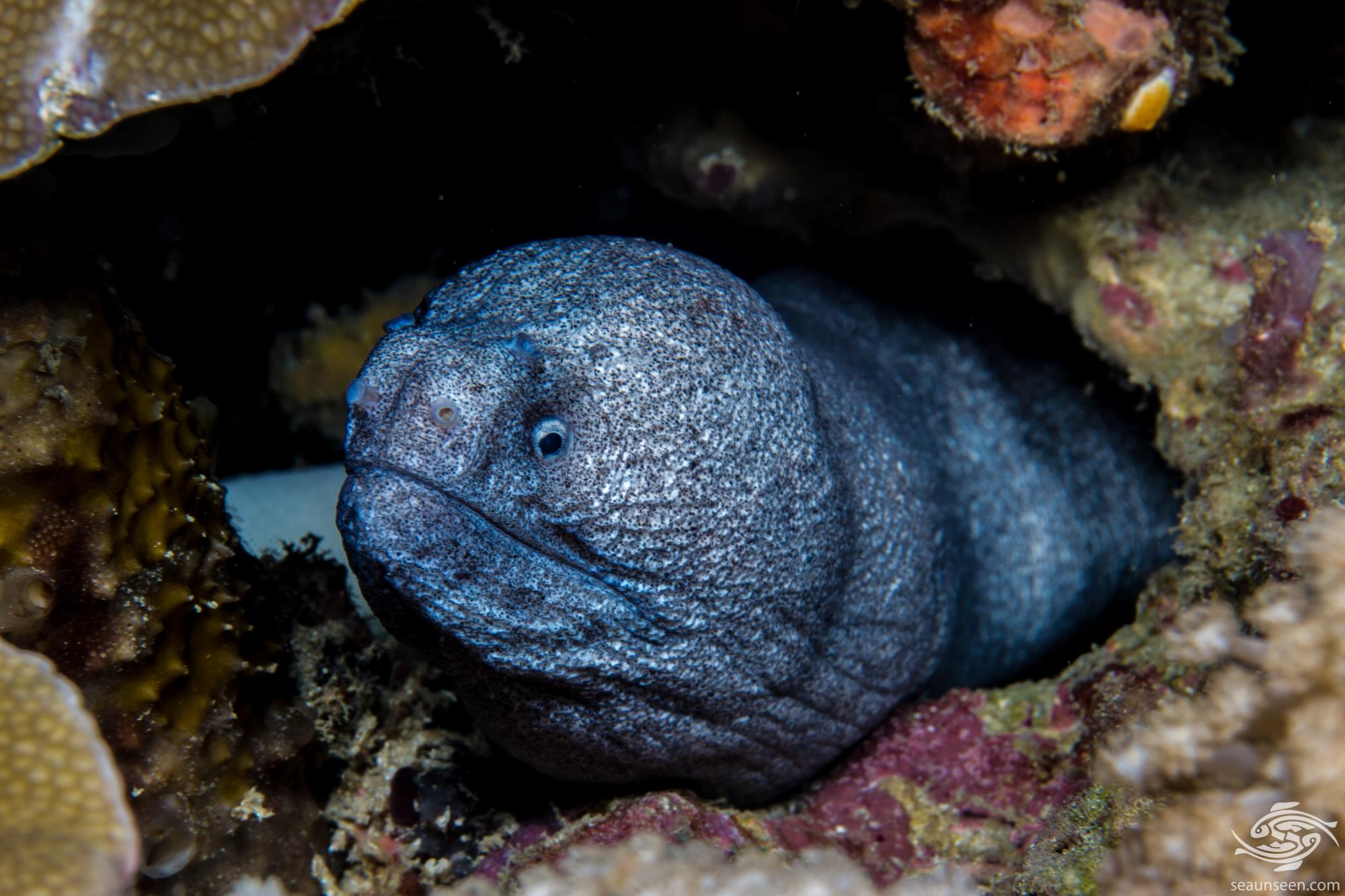 what are eels good for