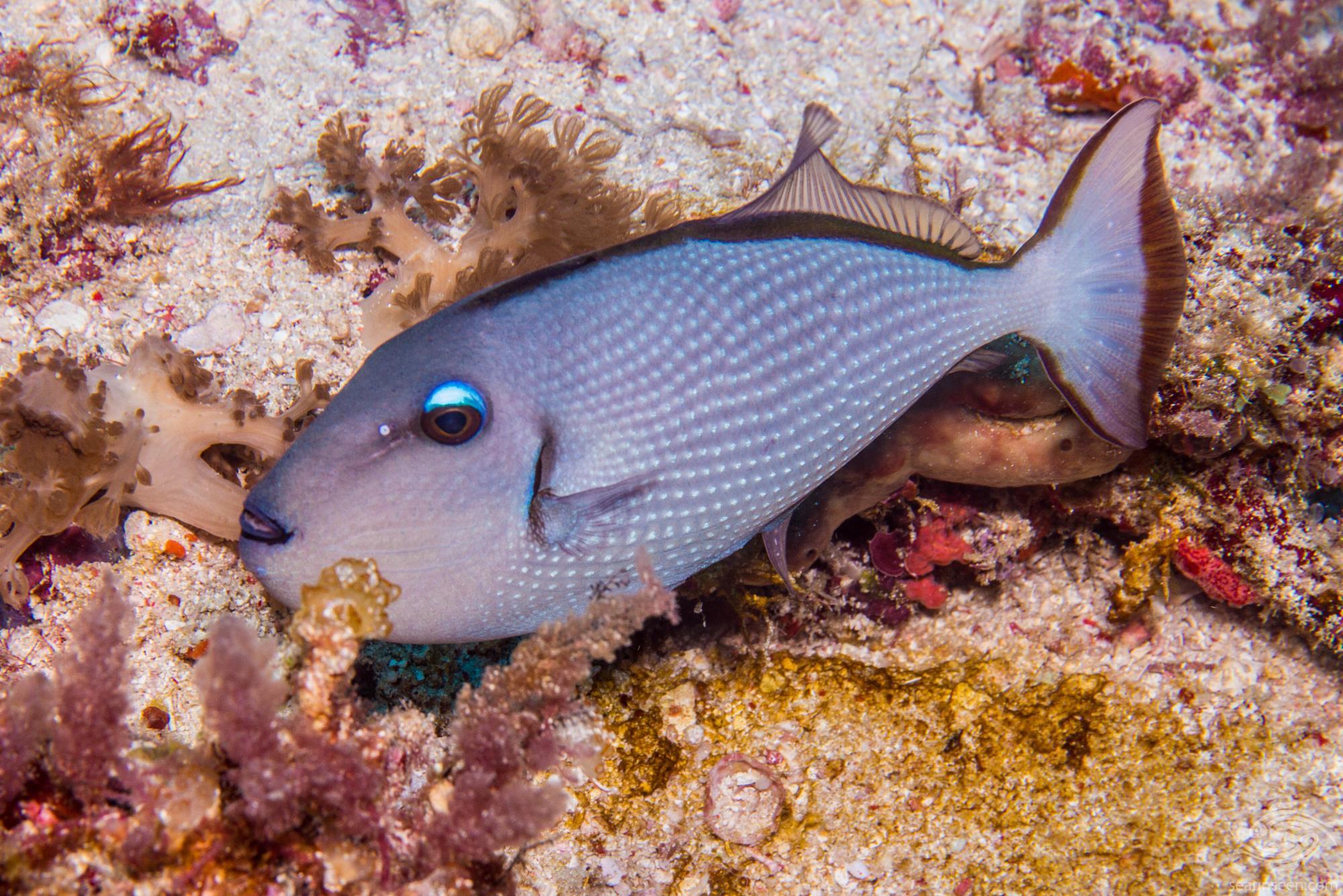Park diving Tanzania 2