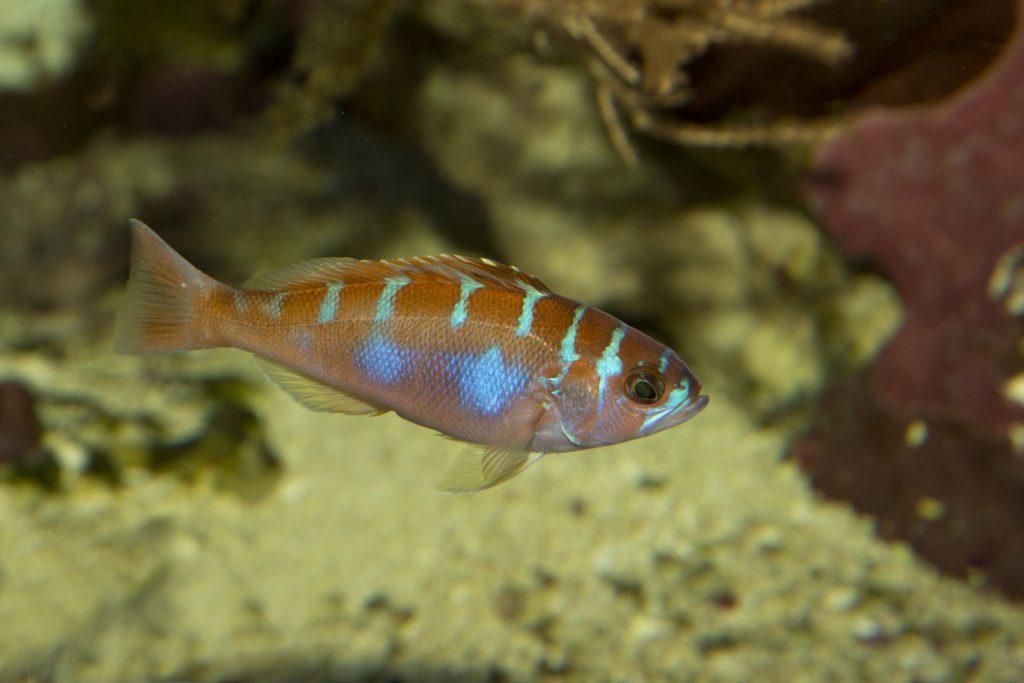 Top 10 Saltwater Aquarium Fishes 4