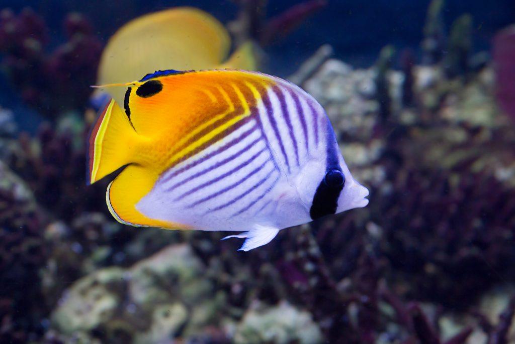 Top 10 Saltwater Aquarium Fishes